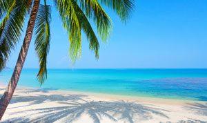 caribbean-palm